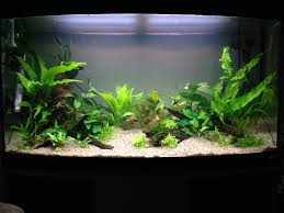 Plants For Aquascaping How To Aquascpae With Plants On Wood