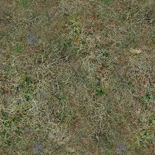 ground textures forest ground textures grass 6 png opengameart org