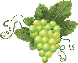 buy stock photos of grapes colourbox