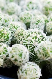 your modern garden succulent wall garden u2014 today u0027s nest