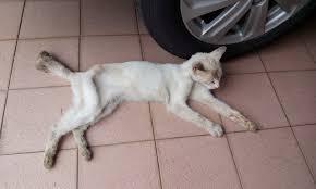 stray cats u2013 pets chats