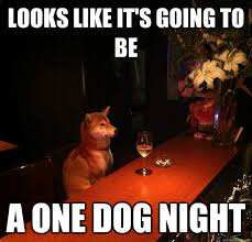 Alone Memes - looks like it s going to be a one dog night drinking alone dog