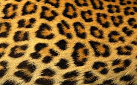 Animal Print Home Decor by Bedroom Decor Animal Print Design Ideas Lovable Decorating Iranews
