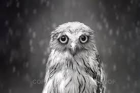 White Owl Meme - sad face owl meme generator