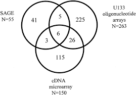 highly expressed genes in pancreatic ductal adenocarcinomas