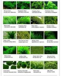 Aquascape Moss Actually Most Of These If Not All Are Not True Mosses Easier To