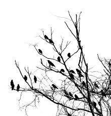 blackbirds tree cliparts cliparts zone