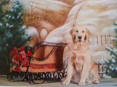 golden retriever christmas cards art by dogs by dezign golden