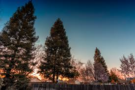 backyard trees at sunset pixrly