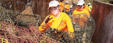derelict crab trap removal in the barataria terrebonne and
