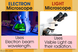 compound light microscope uses light microscope vs electron microscope a detailed comparison