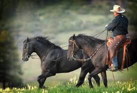 California Flag Horse Home Parelli Com