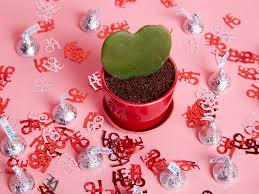 valentine day 2017 gifts 17 thoughtful valentine s day gifts every woman will love