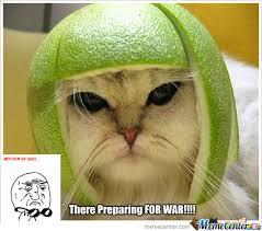 War Meme - cat war by liamfal meme center
