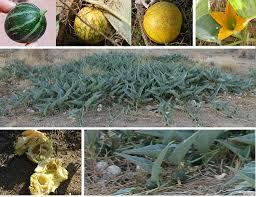 plants native to arkansas eat wild arkansas blog