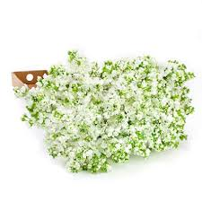stem flowers white stock 100 stems sam s club