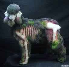 Weiner Dog Halloween Costumes Dog Halloween Costume Zombie Poodle Tom Dwyer Automotivetom