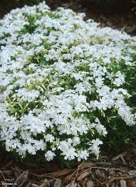 348 best images about hage on pinterest gardens white flowers