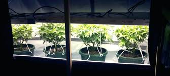 how does light affect plant growth best light for plant growth best of full spectrum light bulbs for