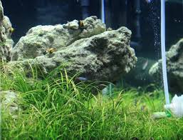 Planted Aquarium Aquascaping 1963 Best Aquascaping Images On Pinterest Aquascaping Aquarium