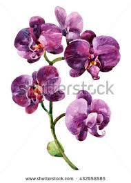 purple orchid flower watercolor purple orchid flowers isolated on stock illustration