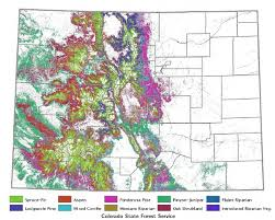 Colorado Us Map by The Native Trees Of Colorado