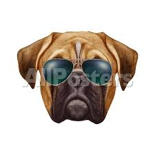 boxer dog jigsaw puzzles original drawing of boxer dog with sunglasses isolated on white