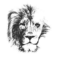 vector sketch style drawing of male lion face royalty free