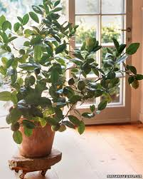 decorative plants for home plants remarkable green round indoor