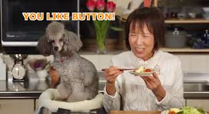 Dog Cooking Meme - why we love cooking with dog the daily dot