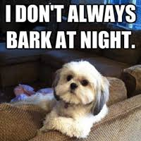 Birthday Dog Meme - 45 funny dog memes dogtime