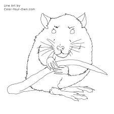 coloring page of a rat rat animal coloring pages rat coloring pages vitlt com