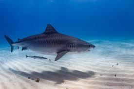 let u0027s speak up for sharks