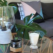 Kings Plant Barn Remuera Shop Online