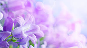 violet wallpapers hd wallpapers pulse