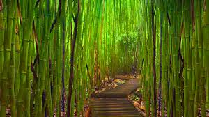 bamboo forest painting wallpaper bamboo forest night