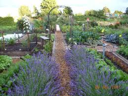 plant lavender to keep the deer away gold creek home