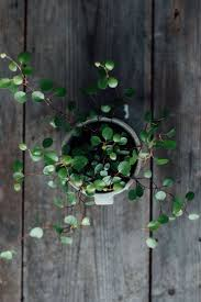 Indoor Vine Plant Best 25 Ivy Ideas On Pinterest Ruins Ruin And Beautiful Ruins