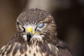 Signs And Symptoms Of Blindness In Birds Symptoms Causes Diagnosis Treatment Recovery