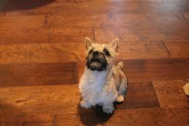 Best Scratch Resistant Laminate Flooring Trends Decoration Scratch Resistant Flooring For Dogs