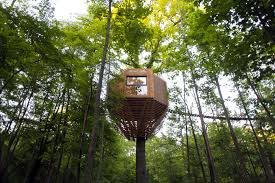 cool trees cool origin tree house in a forest in france