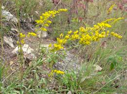 native new england plants native butterfly and pollinator plant list prairie haven