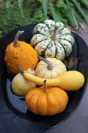 growing gourds thriftyfun