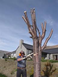 controversial trees to go otago daily times news