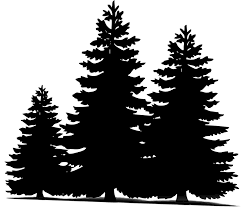 free illustration pine trees sillueta free image
