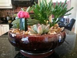 Cactus Garden Ideas Simple Cactus Garden Ideas