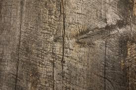 planche de bouleau images gratuites arbre branche structure plante planche