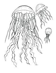 free coloring pages jellyfish jellyfish coloring pages free coloring free printable jellyfish
