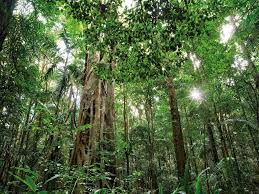 native plants in the tropical rainforest subtropical rainforest steve parish nature connect