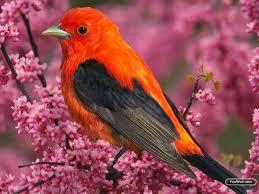 youwall beautiful orange bird wallpaper wallpaper wallpapers